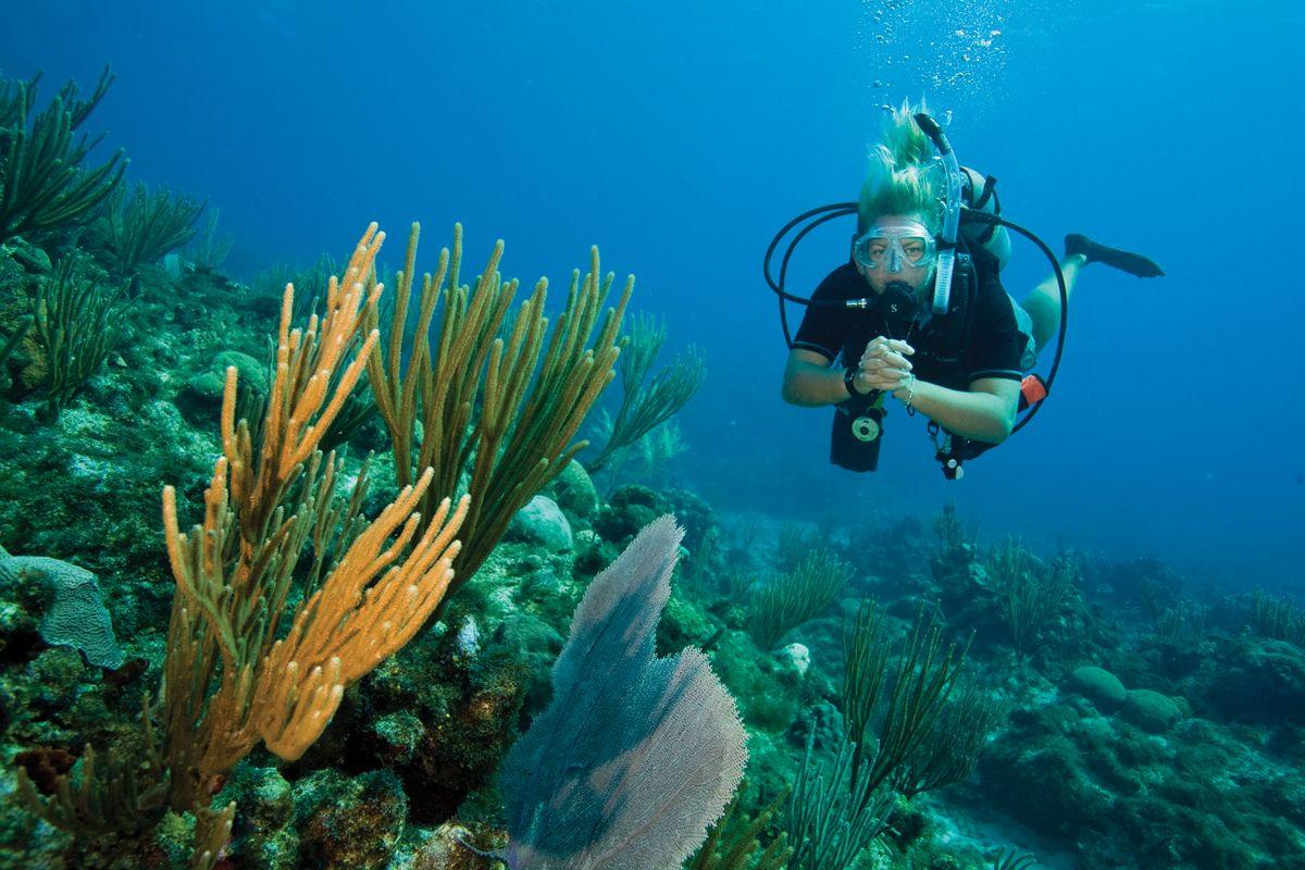 Free Scuba Diving