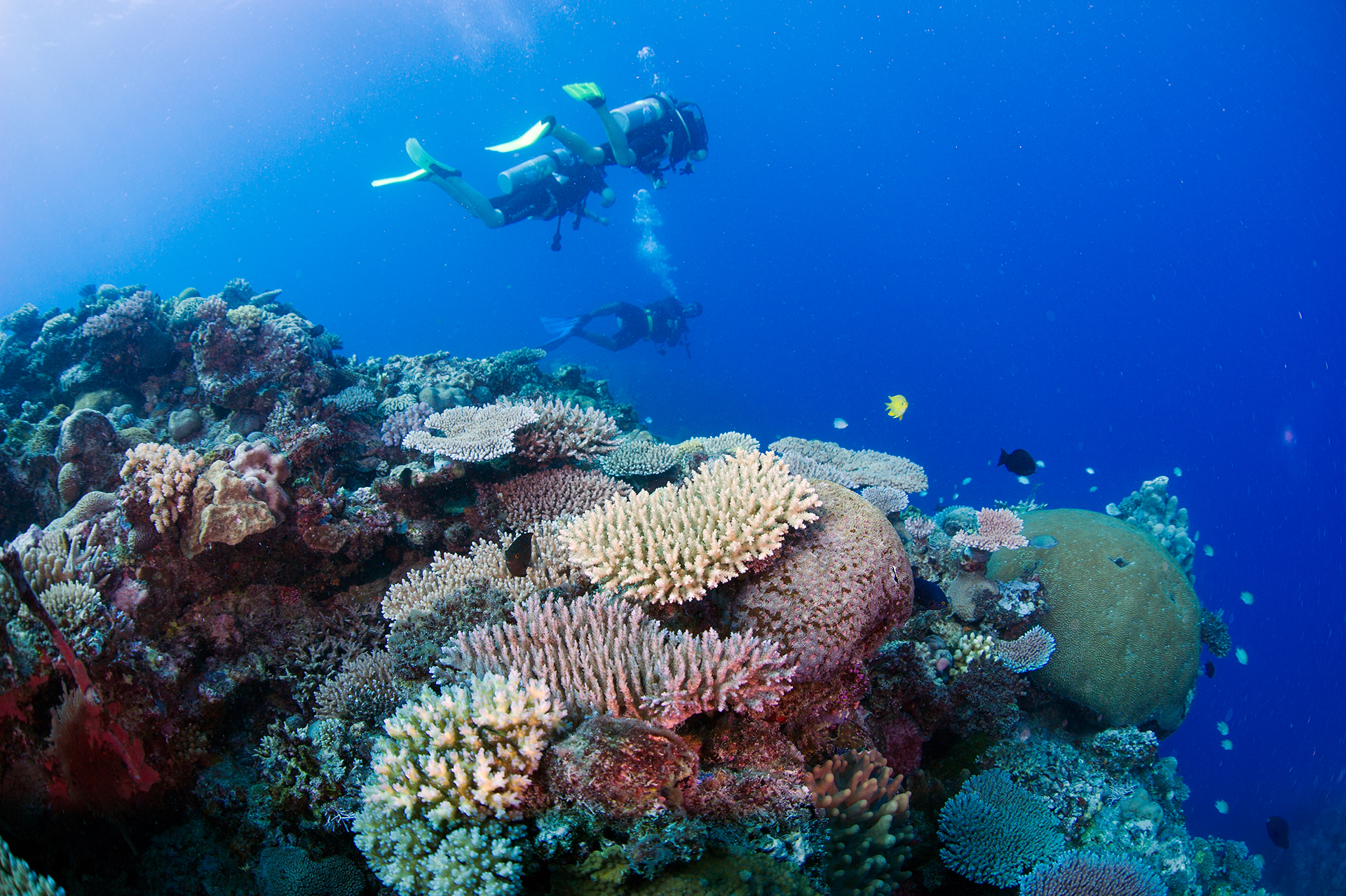 COMPLETE A DIVE COURSE AND DIVE FREE FOR THE REST OF YOUR STAY !